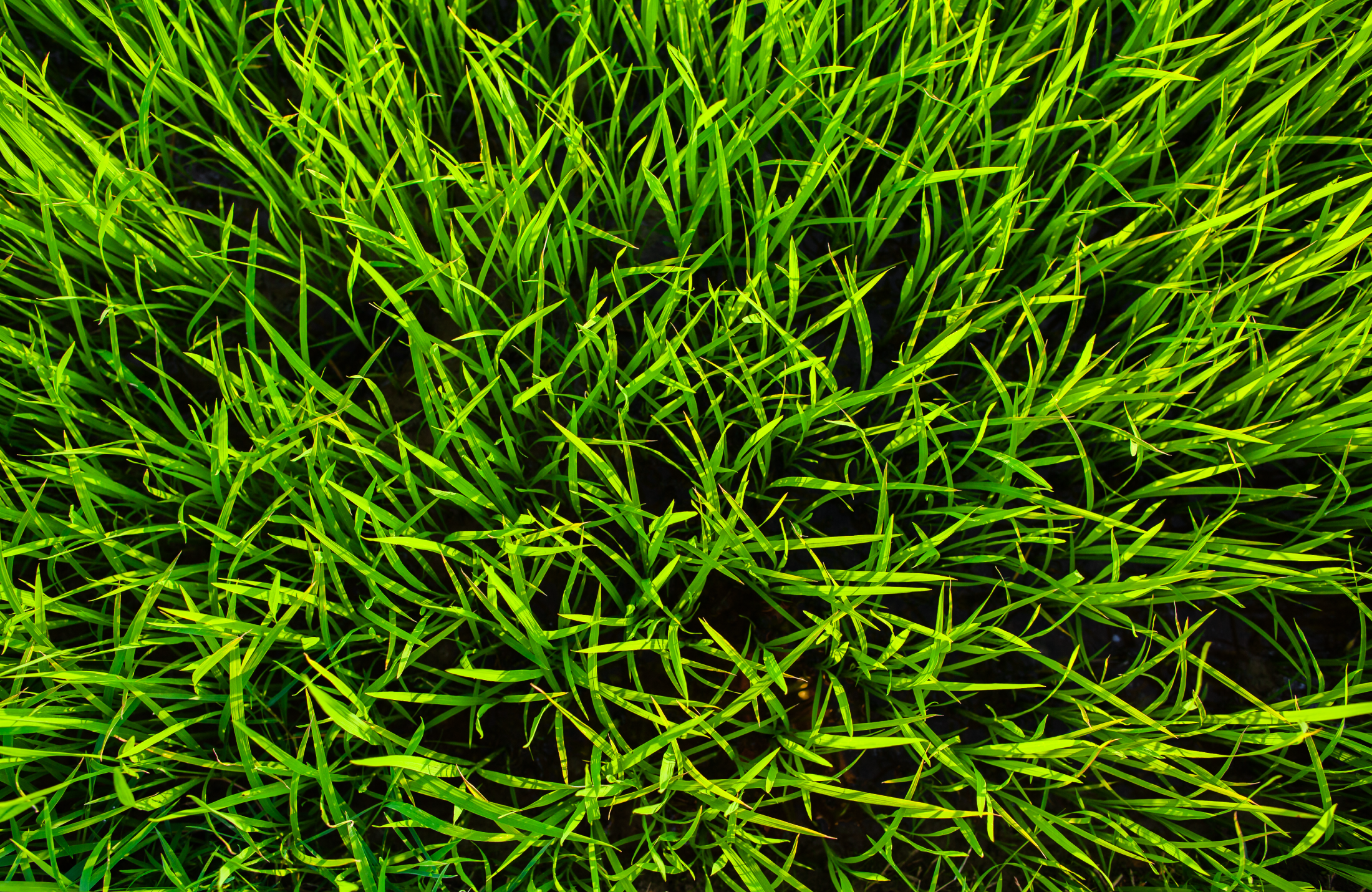 Home Banner Lawn